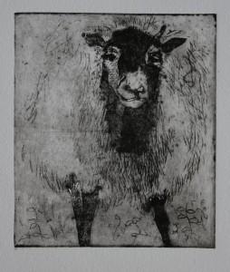 fåret 1 (640)