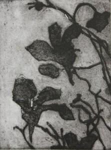krasse (640)